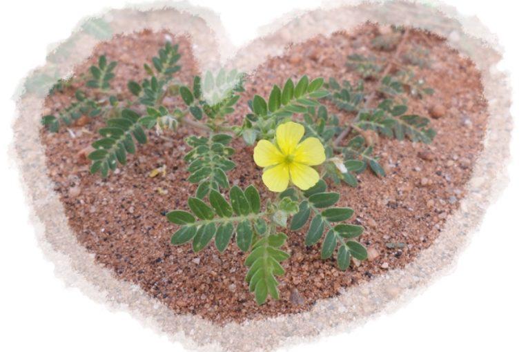Tiny Flower in Cricket Ground