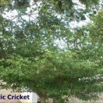 Tamilnadu Cricket